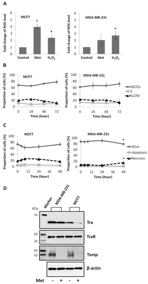 Effects of metformin on ROS level, cell cycle, apoptosis, and expression of Trx system proteins in breast cancer cell lines.
