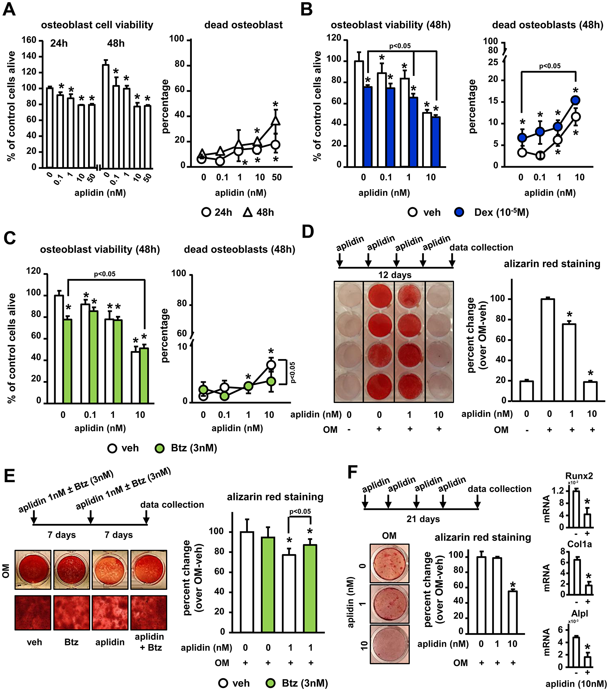 Aplidin decreases osteoblast viability and function and co-administration of Btz partially prevents these effects.