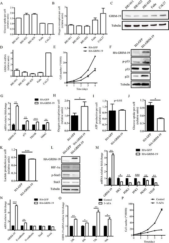 Ectopically expressed GRIM-19 increases oxygen consumption and decreases cell proliferation in JHU-028 cells.