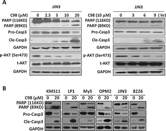 C98 activates apoptotic signaling in MM cells.