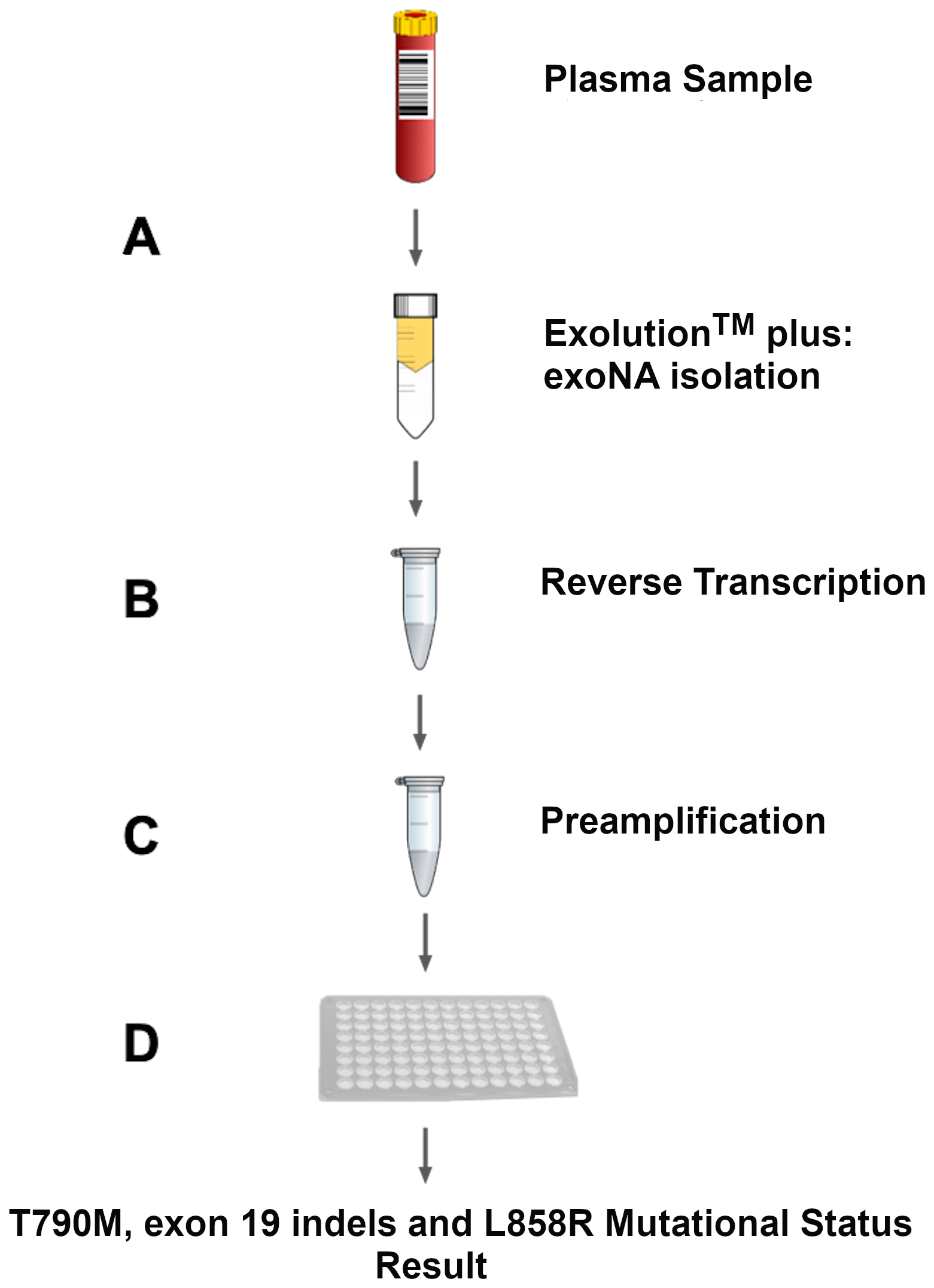 Assay workflow overview.