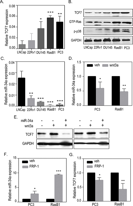 Activation of TCF7 in metastatic prostate cancer cells.