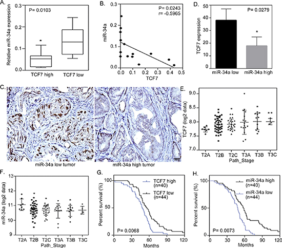 miR-34a negatively correlates with TCF7 expression in metastatic prostate cancer cells.
