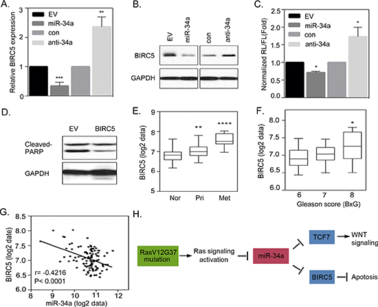 Activated Ras signaling induces an anti-apoptotic pathway that is regulated by miR-34a.