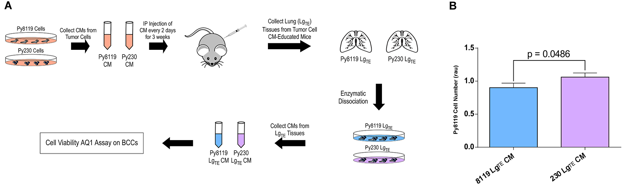 The secretomes of metastatic breast cancer cells promote a tumor-supportive environment in the mouse lung.