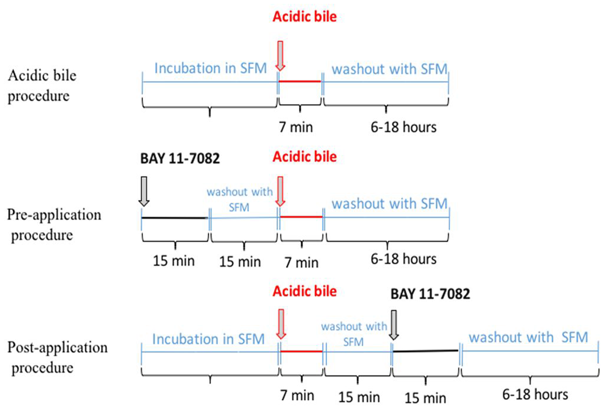 Schematic representation of pre- and post-application of NF-κB inhibitor (BAY 11-7082) in acidic bile-exposed MHPC.