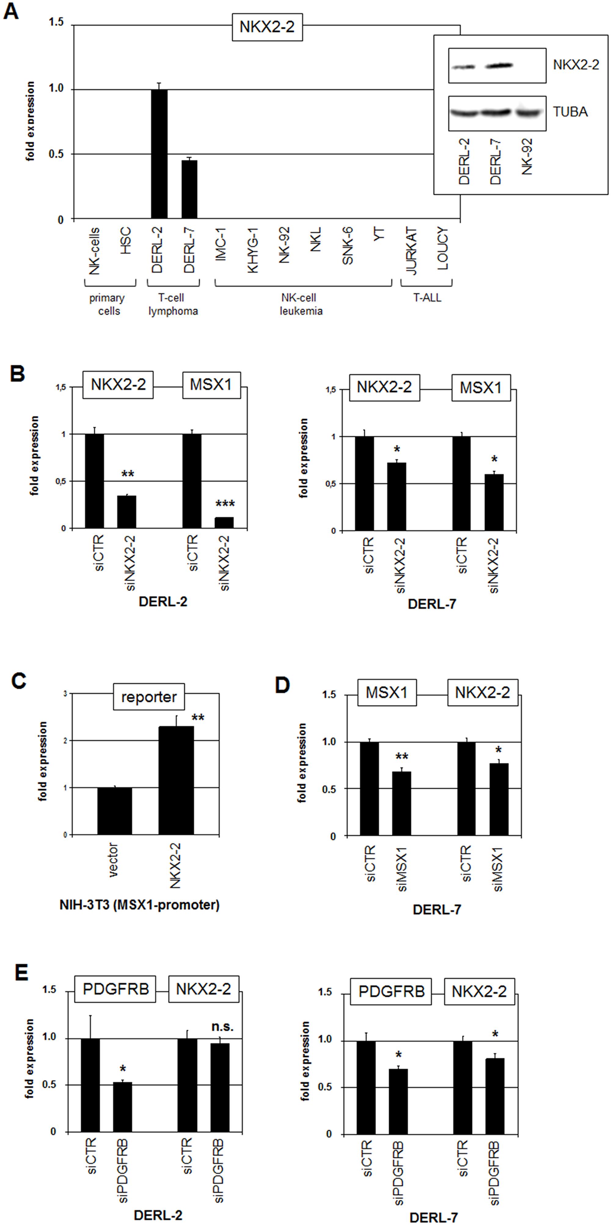 Analysis of NKX2-2.