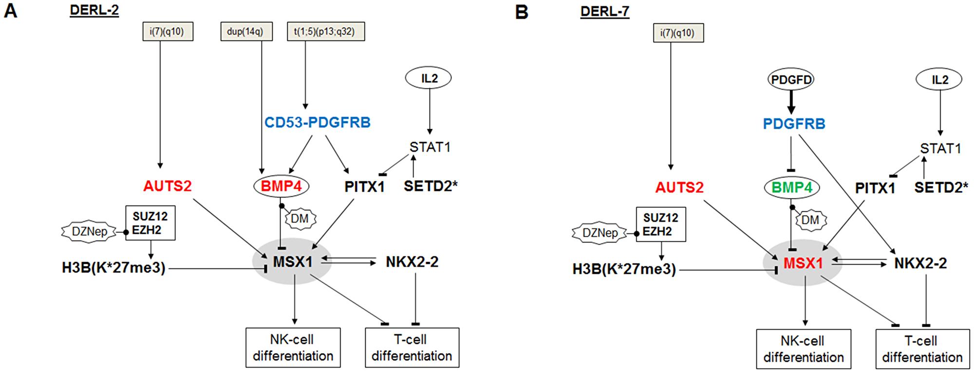 Aberrant gene regulatory networks in HSTL cell lines.