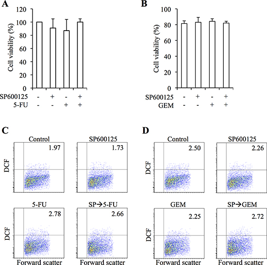 JNK inhibitor pretreatment does not increase the toxic effects of 5-fluorouracil and gemcitabine on normal human fibroblasts.