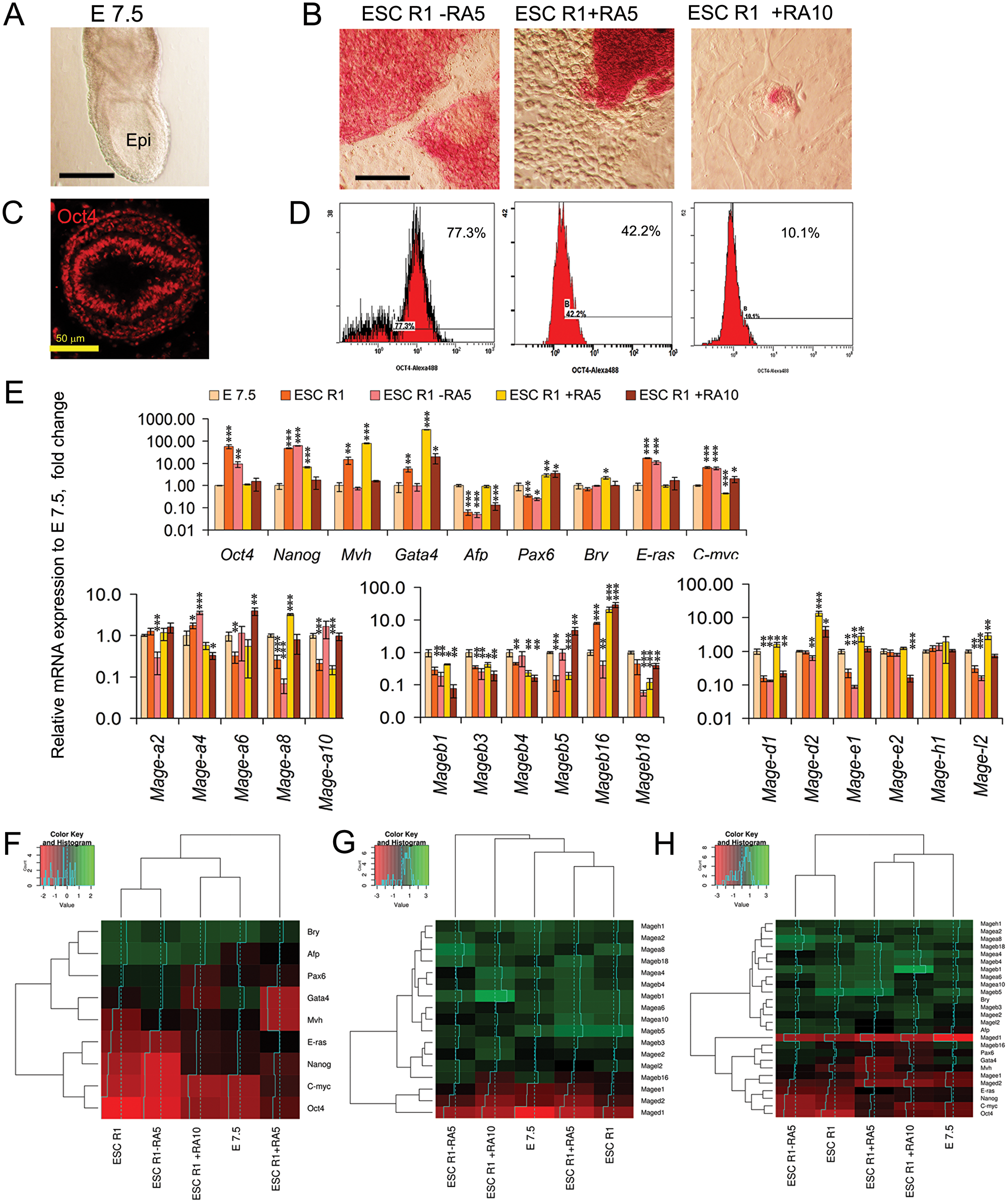 Comparative analysis of Mage family expression patterns in E7.5 mouse embryos and differentiating ESCs.