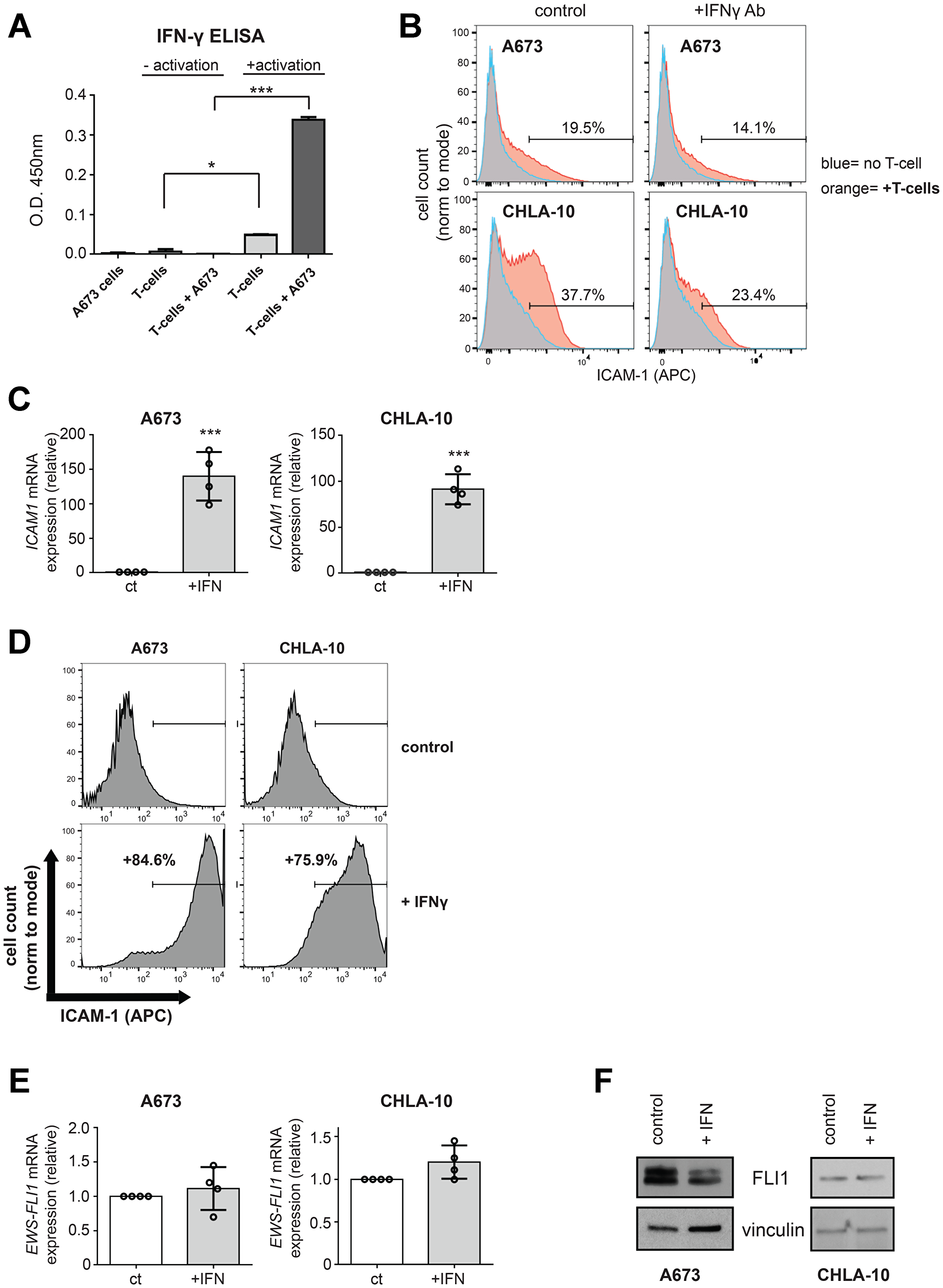 IFN-γ mediated increases in Ewing tumor cell ICAM-1 expression can occur in the absence of changes in EWS-FLI1 expression.