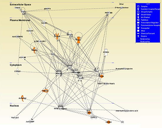 Visual representation of the principal network generated by Ingenuity Pathway Analysis (IPA).