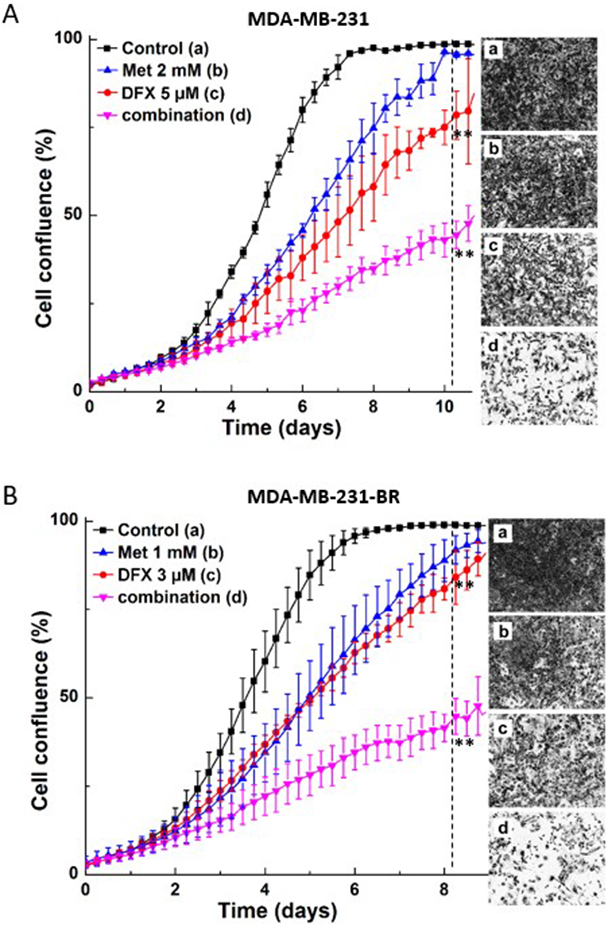 Effect of Met and iron chelator, DFX, on MDA-MB-231 and MDA-MB-231-BR cell proliferation.