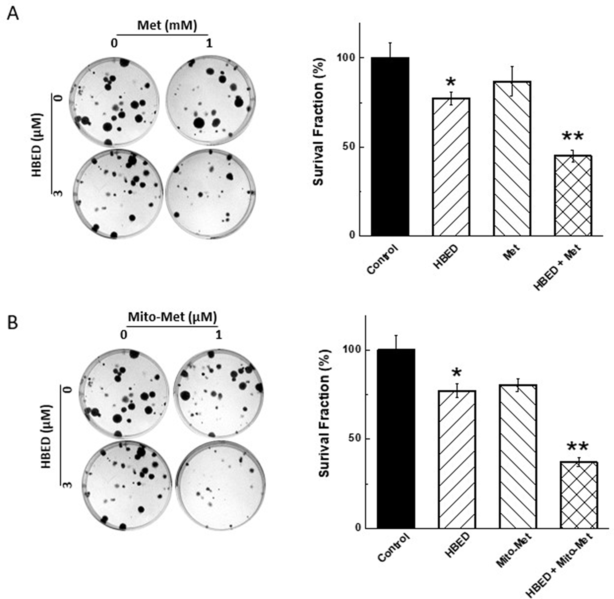 Effect of Met, Mito-Met, and HBED on colony formation by MiaPaCa-2 cells.