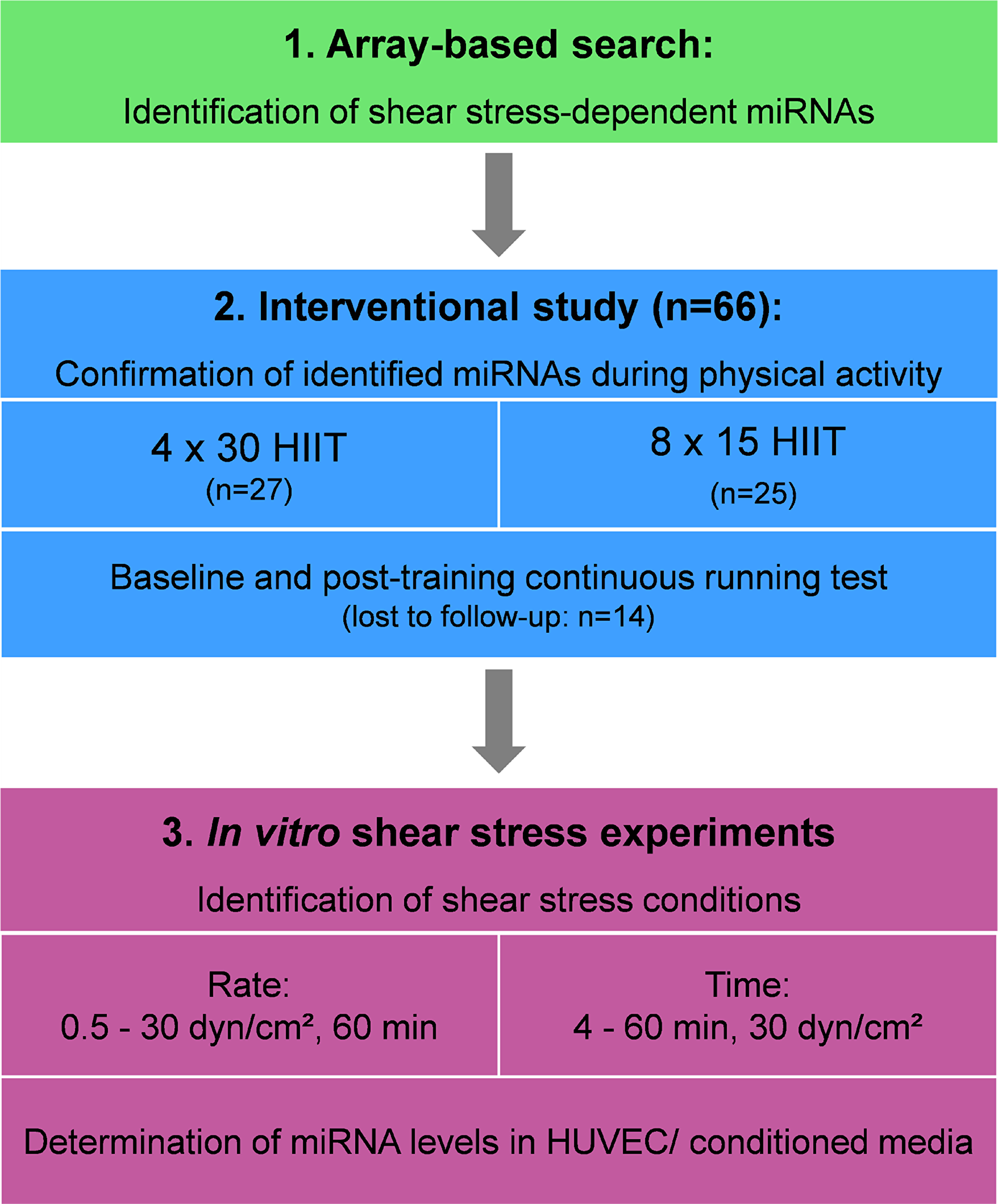 Overall study design. HIIT, high-intensity interval training; HUVEC, human umbilical vein endothelial cells.