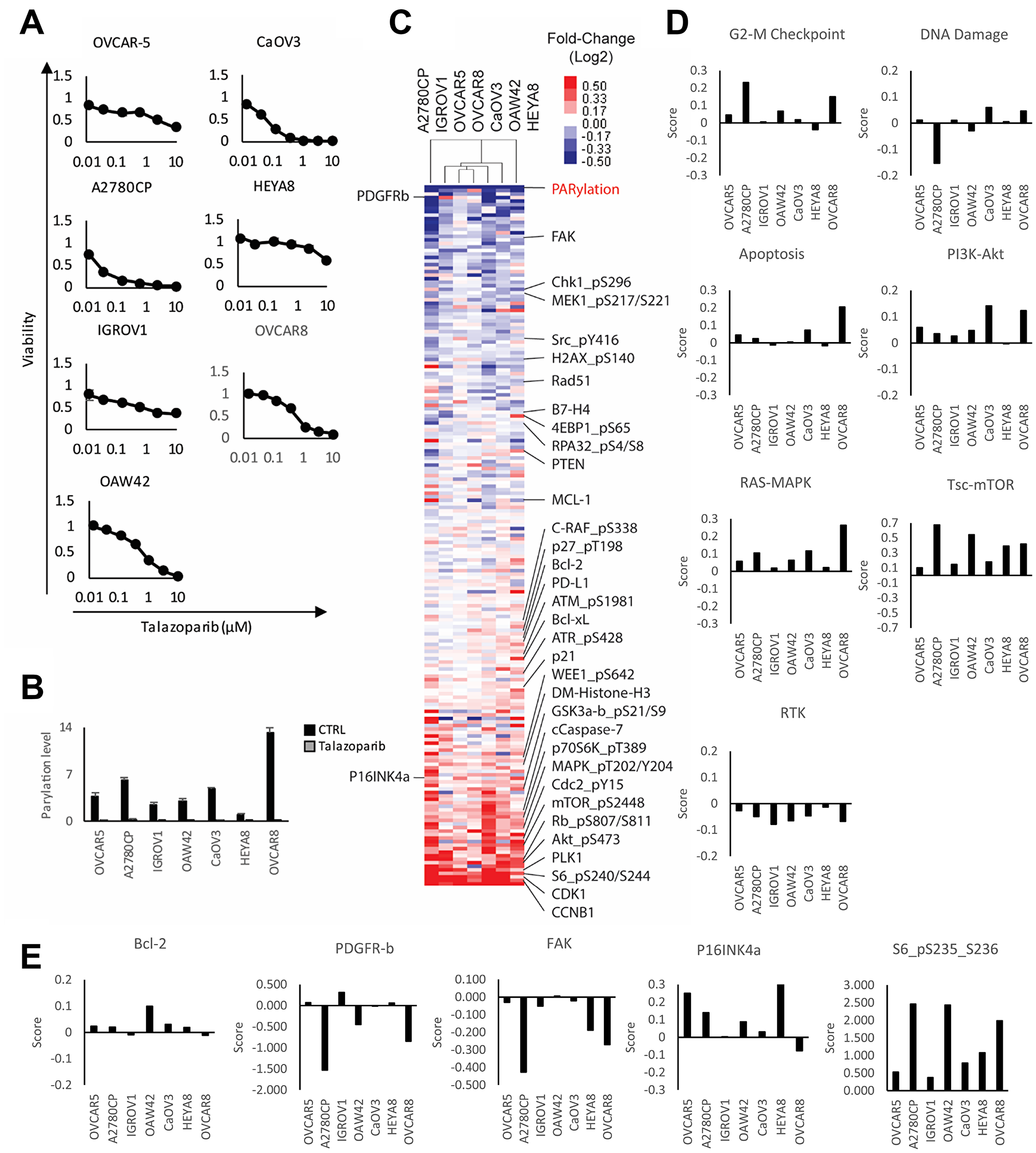 Adaptive response of ovarian cancer cell lines treated with PARP inhibitor.