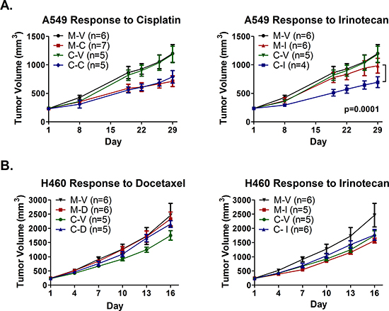 Epigenetic therapy augments response of A549 xenografts, but abrogrates response of H460 xenografts, to irinotecan, and does not sensitize to cisplatin or docetaxel.