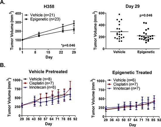Epigenetic therapy in vivo does not sensitize H358 xenografts to immediate subsequent chemotherapy.