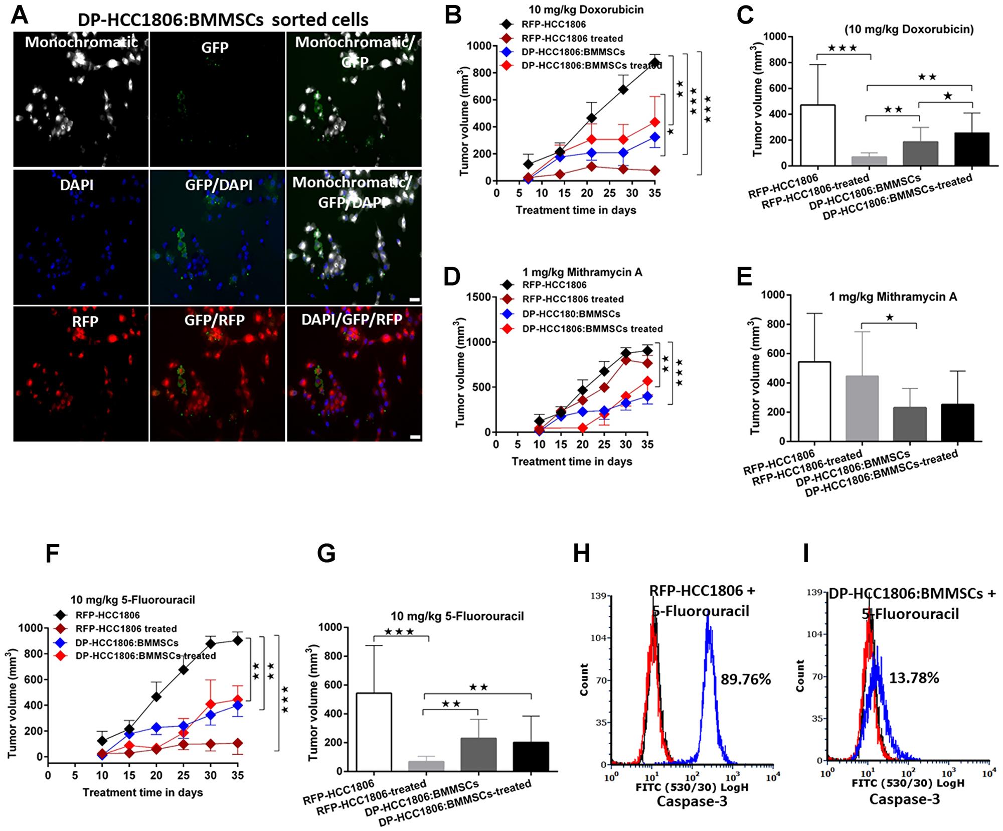 DP-HCC1806:BMMSC xenografts mediate chemotherapeutic resistance.