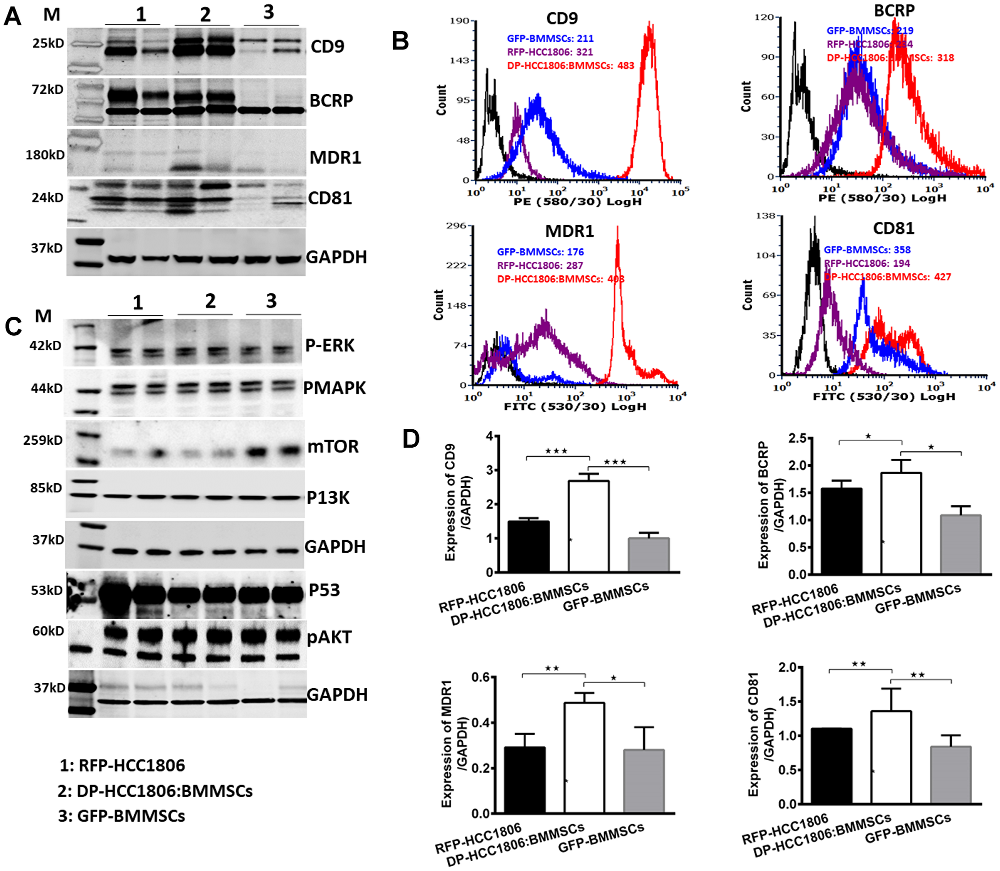 Differential expression of tetraspanins and drug resistance proteins in DP-HCC1806:BMMSCs.