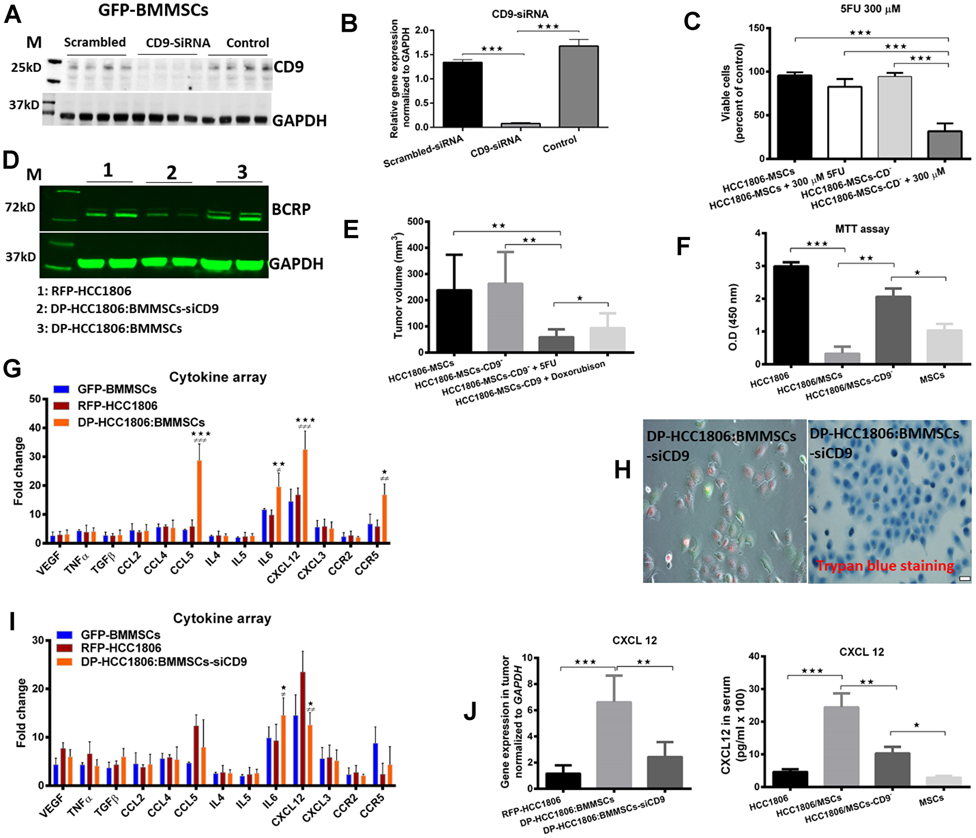 BMMSCs-CD9 siRNA knockdown in DP-HCC1806:BMMSC xenografts reduces chemotherapeutic resistance to 5FU and doxorubicin in vivo.