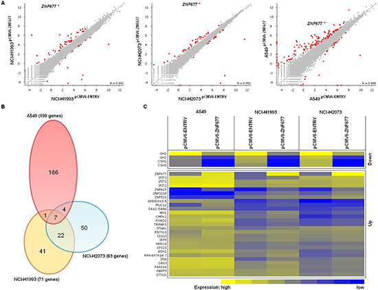 Effect of ZNF677 overexpression on the transcriptome of NSCLC cells.