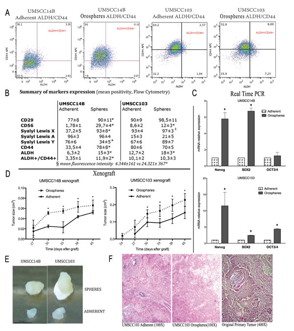 Cancer stem cell characterization.