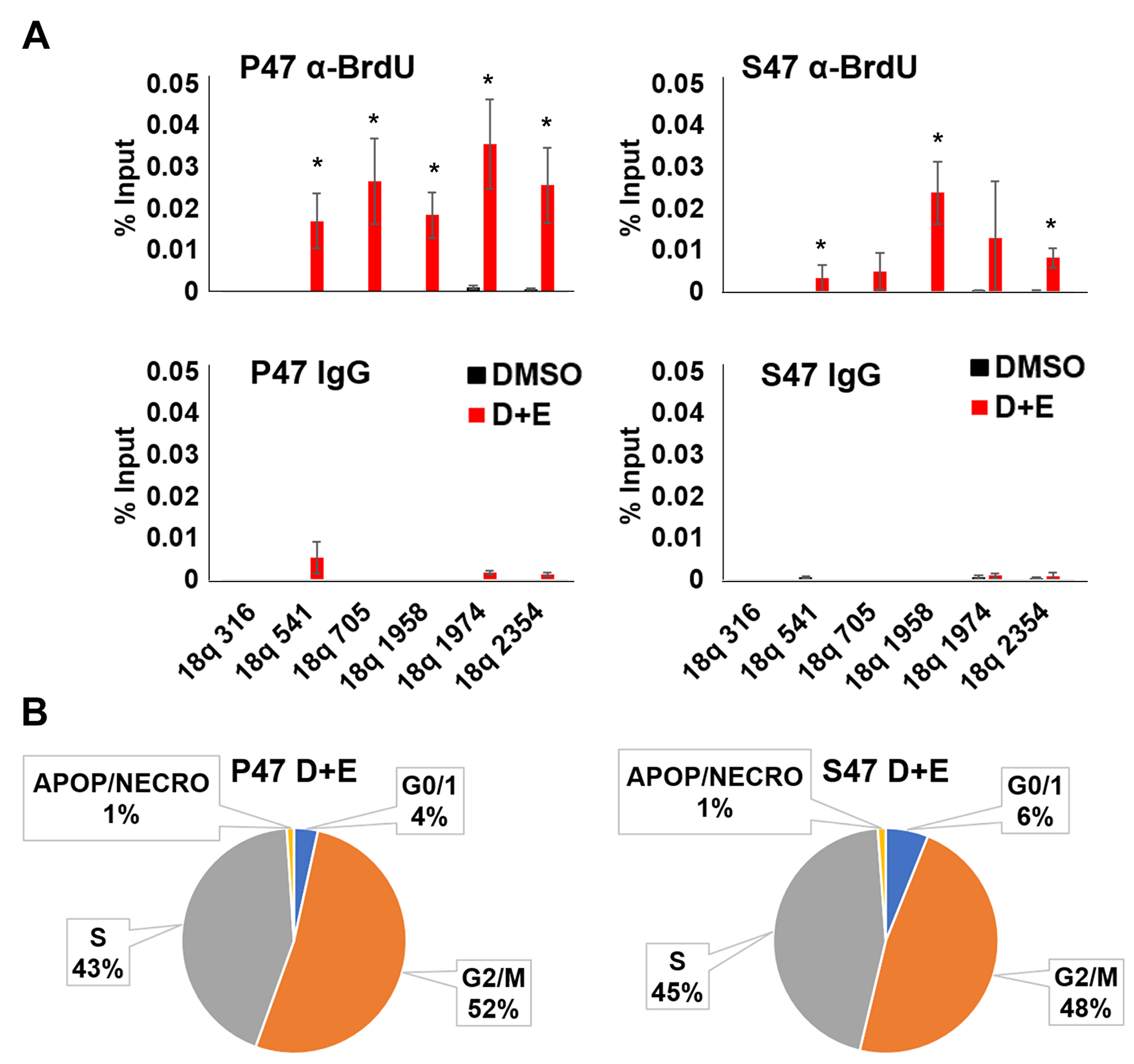 Human p53 S47 is deficient for telomeric DNA repair synthesis.