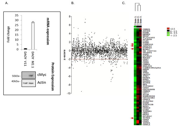 High-throughput lipid and protein kinase siRNA screen aimed at identifying drug targets for cMyc-overexpressing medulloblastoma cells.
