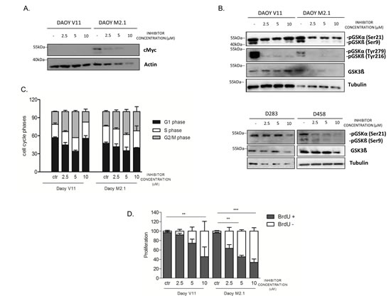 PCTK1 inhibition affects numerous cellular processes in c-Myc hallmarked MB cell lines.