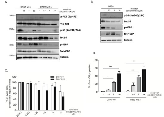 PCTK1 inhibition alters Akt/mTOR pathway in c-Myc hallmarked MB cell lines.