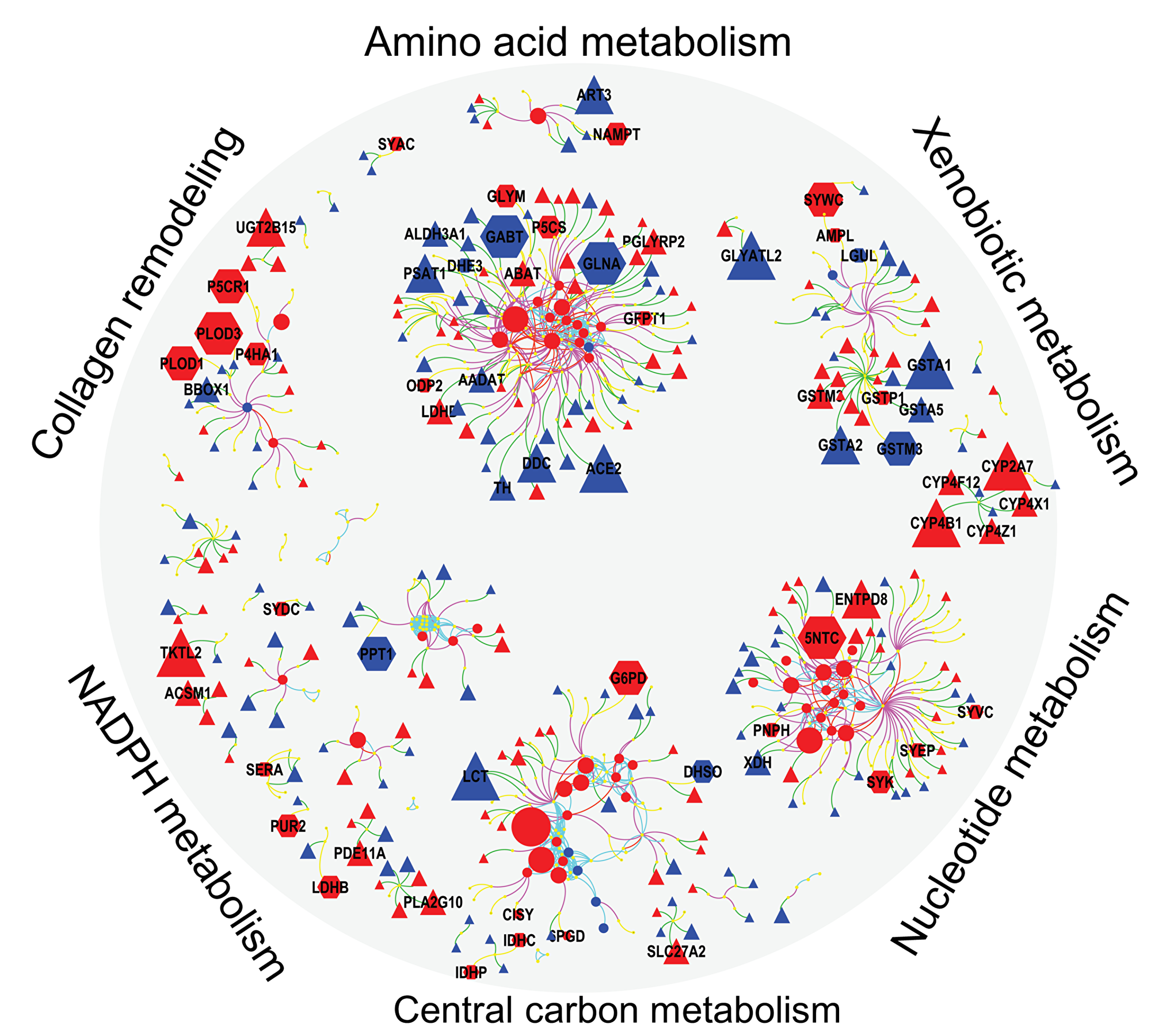Integrated visualization of genes (Δ), protein () and metabolites () by mapping their biochemical and chemical relationships.