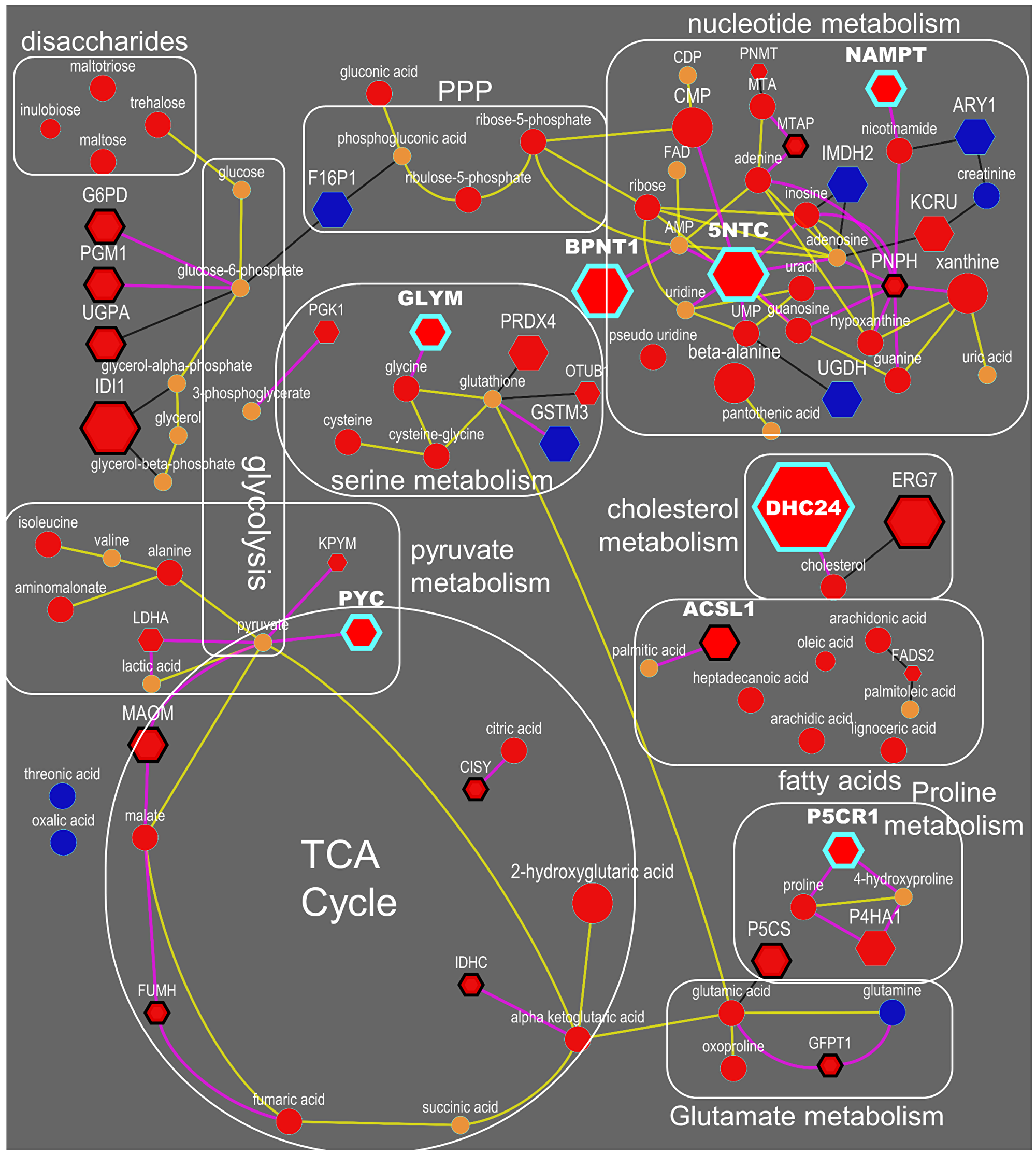 Integrated biochemical pathway visualization for metabolite and proteins datasets.