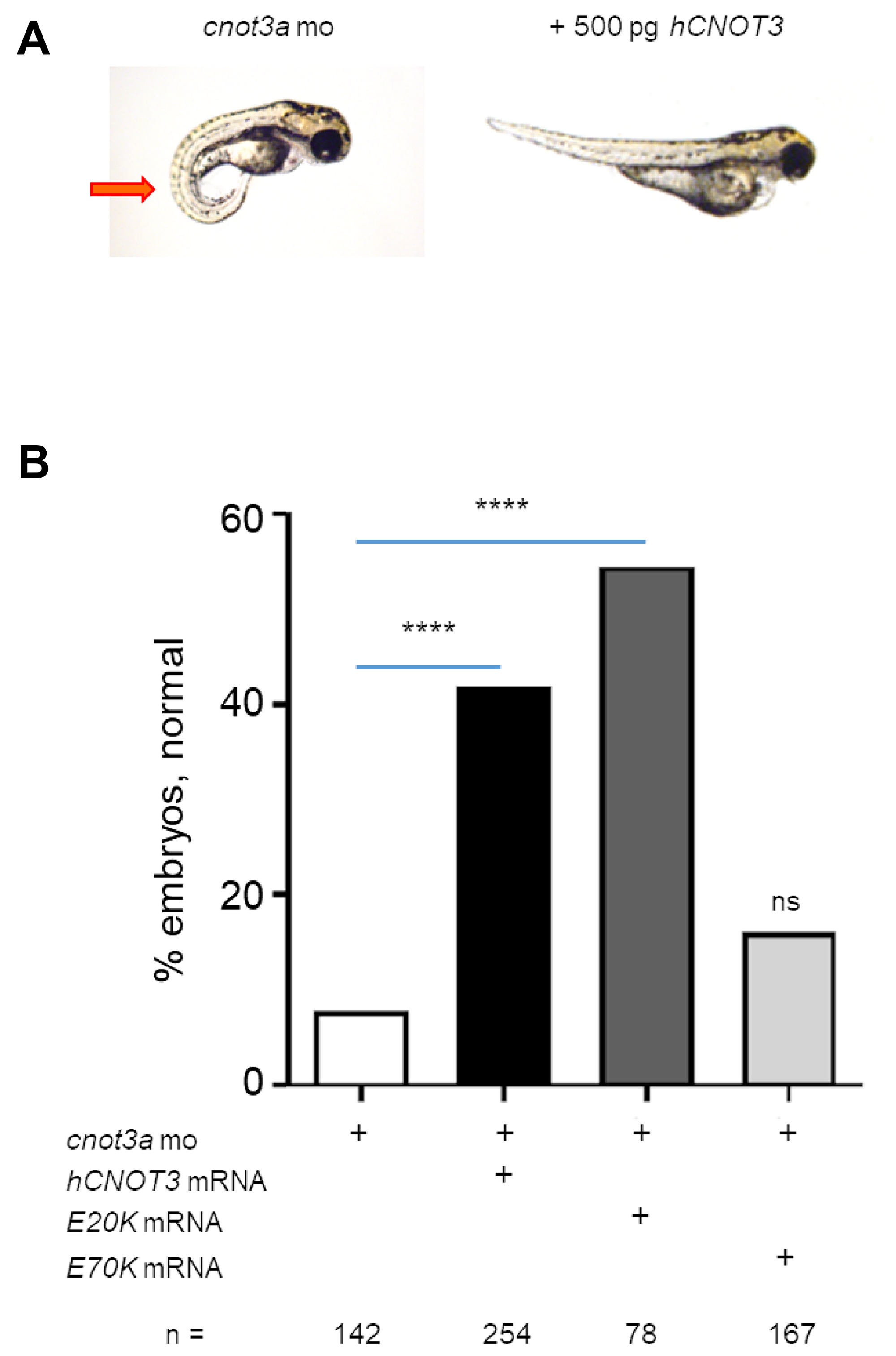 Functional characterization of CNOT3 variants.