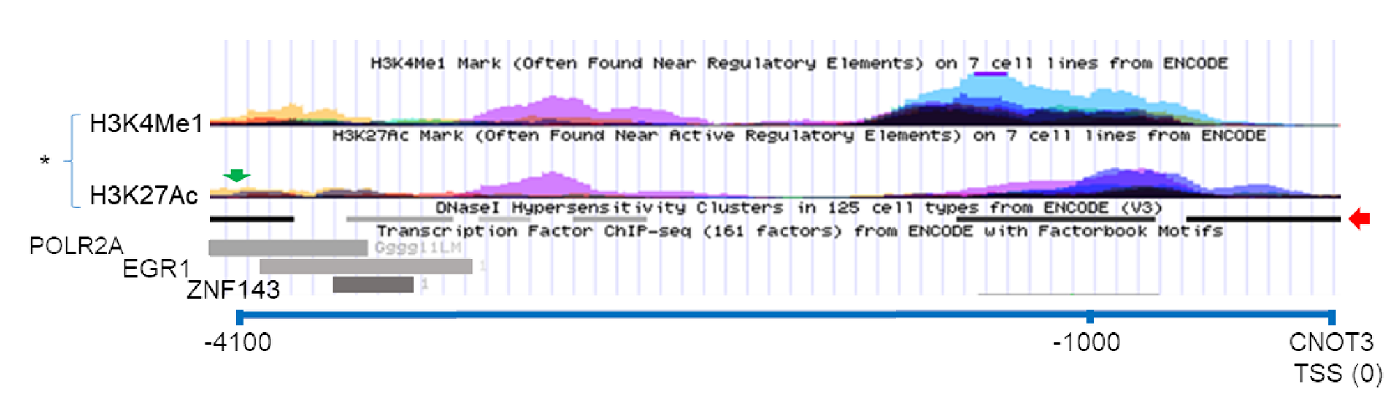Possible CTBP1 binding site near the CNOT3 gene.