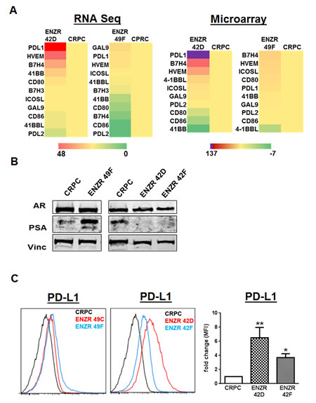 Differential expression of T cell checkpoint molecules in ENZ resistance.