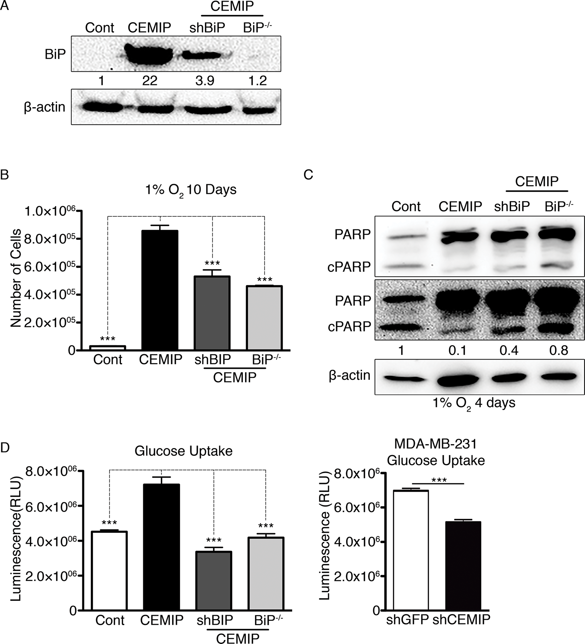 Upregulation of BiP contributes to CEMIP-mediated cell survival in hypoxic conditions and increased glucose uptake.