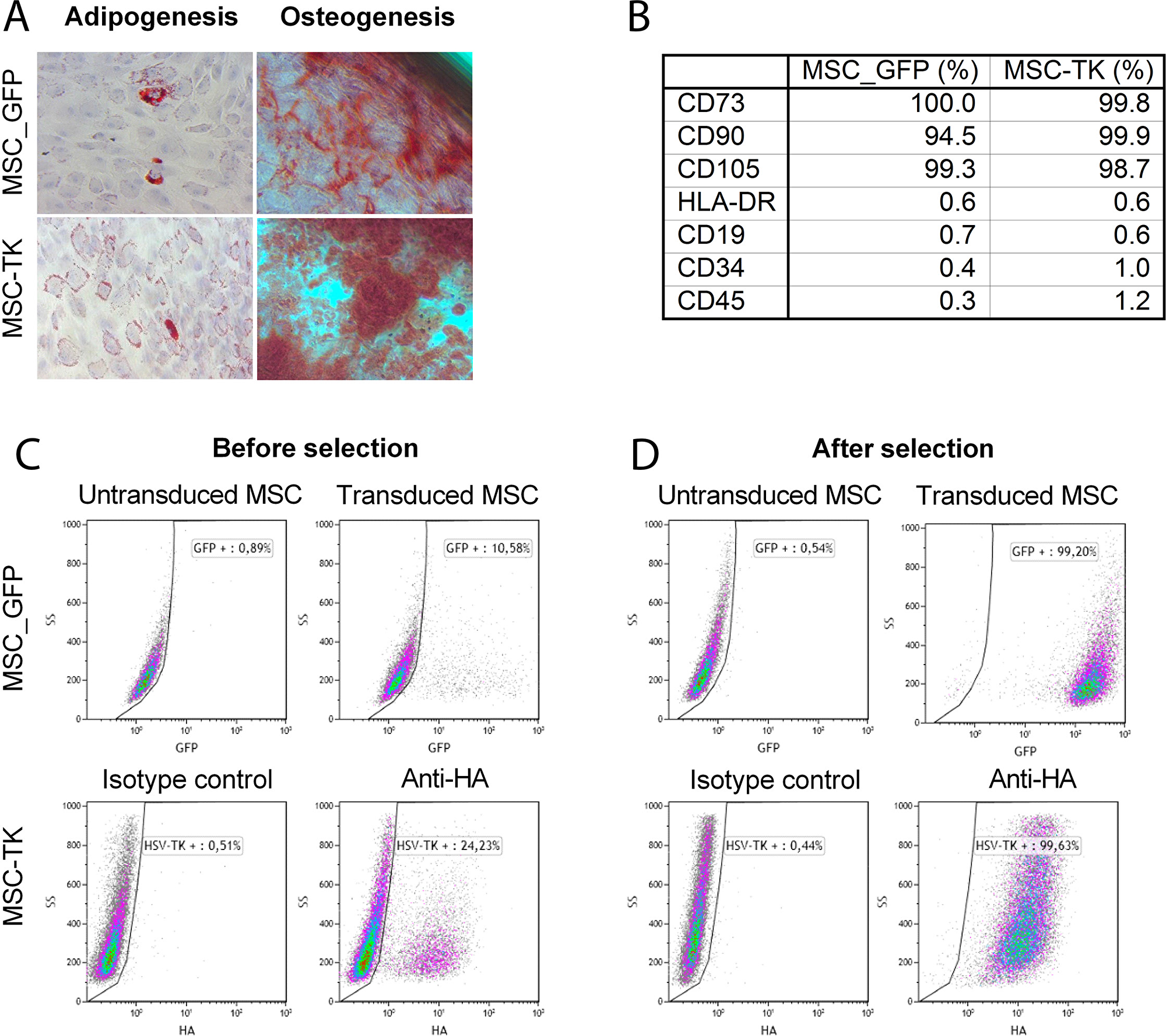 Characterization of transduced MSCs by in vitro differentiation assay and flow cytometry.