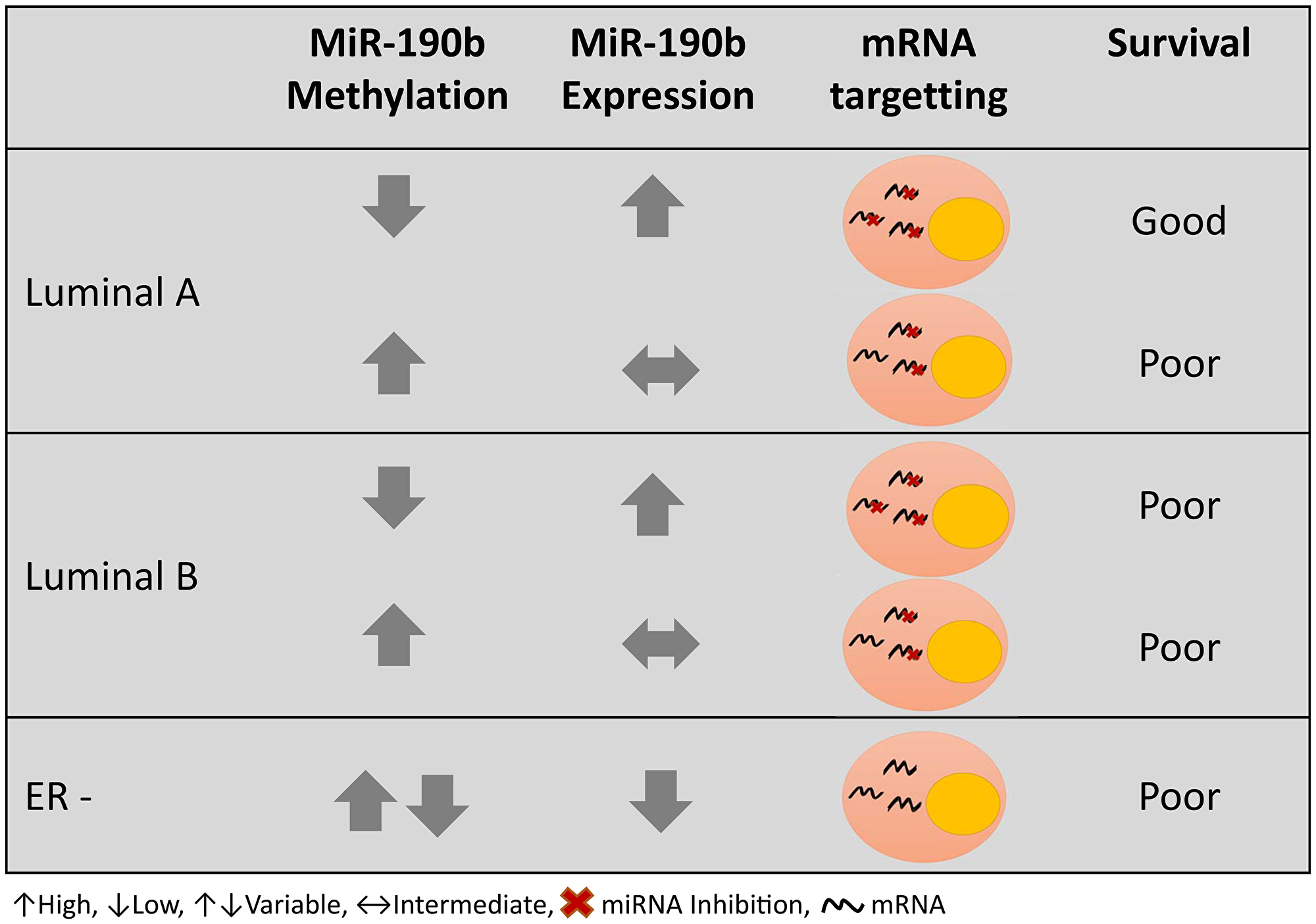 Graphical summary of miR-190b methylation and expression in different breast cancer subtypes and prognosis.