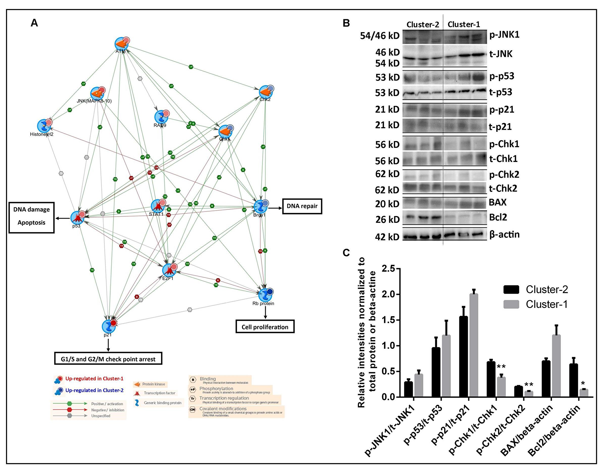Delineation of signal transduction networks and determination of chemosensitivity of two AML clusters.