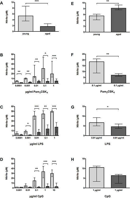 NO release by macrophages (A–D) and microglial cells (E–H) from young and aged mice in vitro.