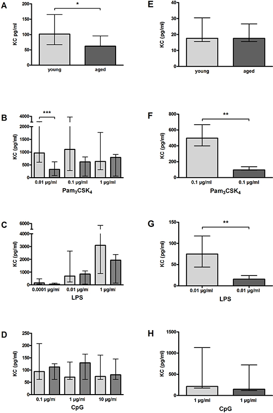 KC release by macrophages (A–D) and microglial cells (E–H) from young and aged mice in vitro.