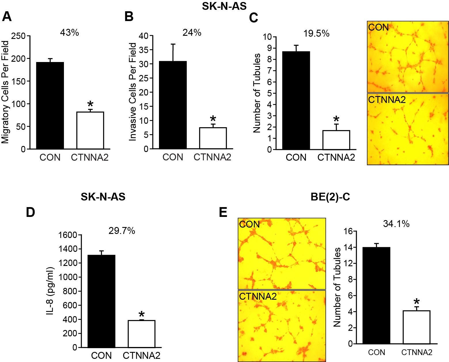 α-N-catenin inhibits migration, invasion, and angiogenesis in vitro.