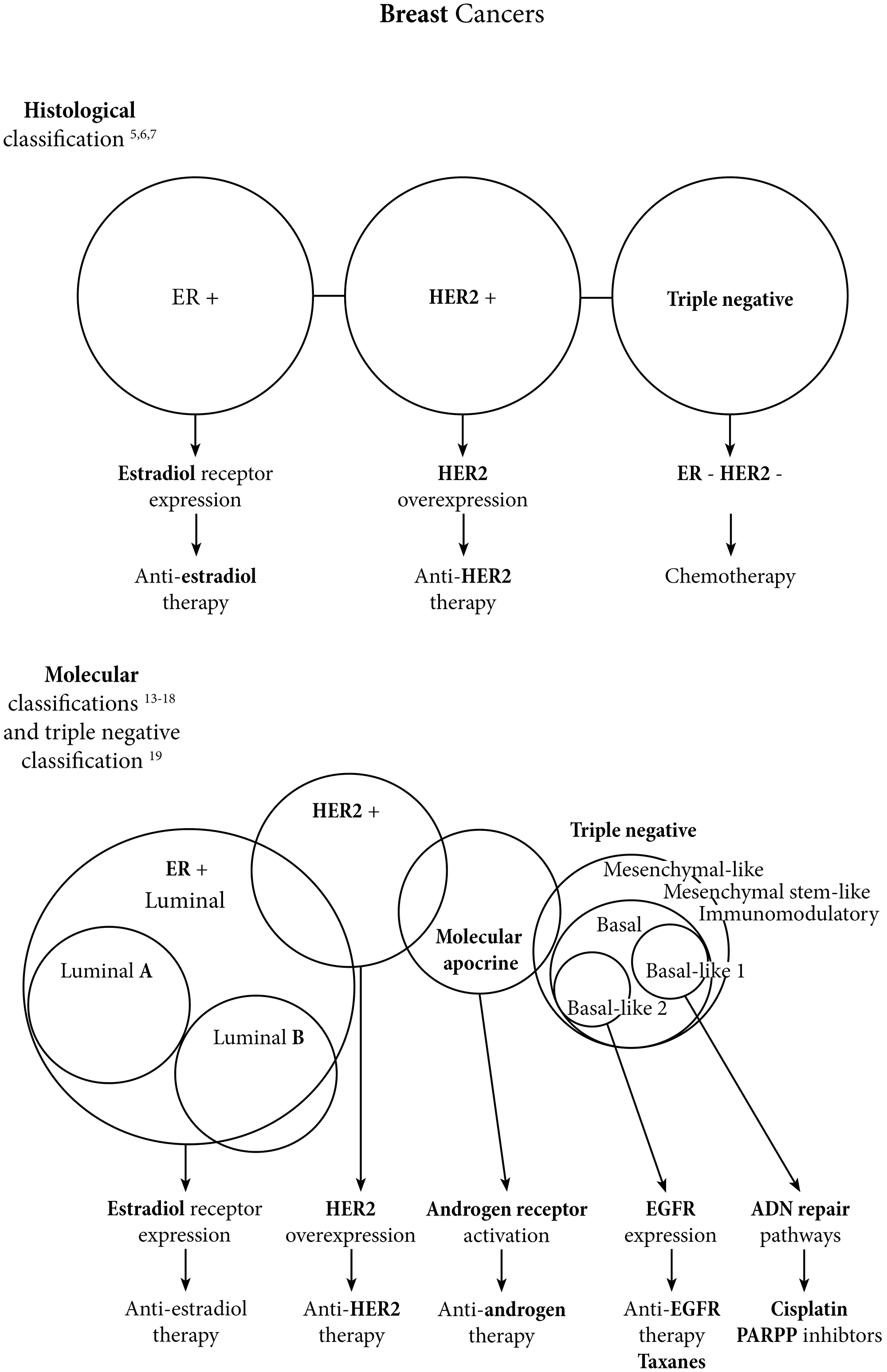 Breast cancers landscape evolution from histologic to molecular classifications.