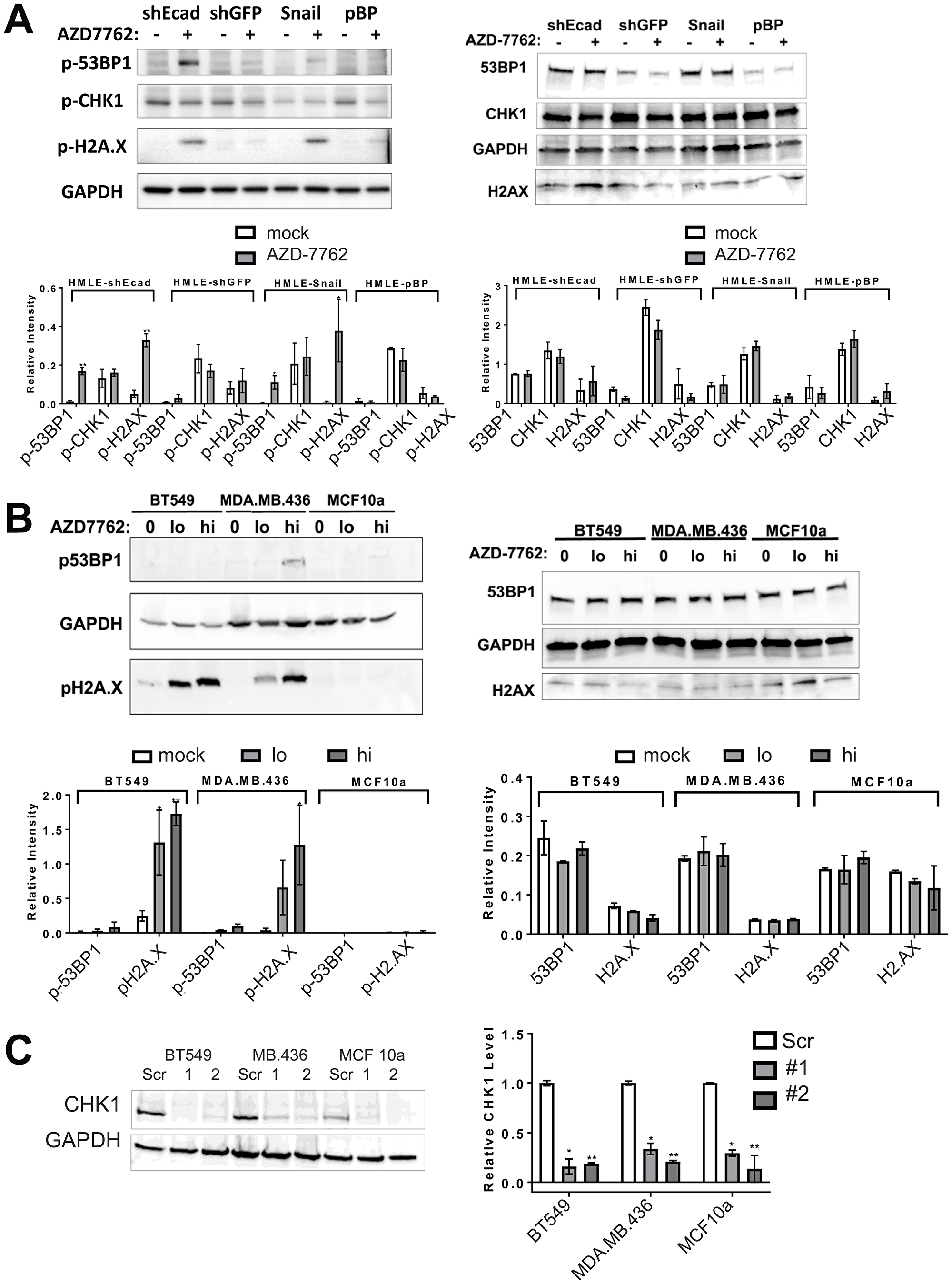 CHK1 inhibitors or CHEK1 knockdown induce DNA damage in breast cancer cell lines.