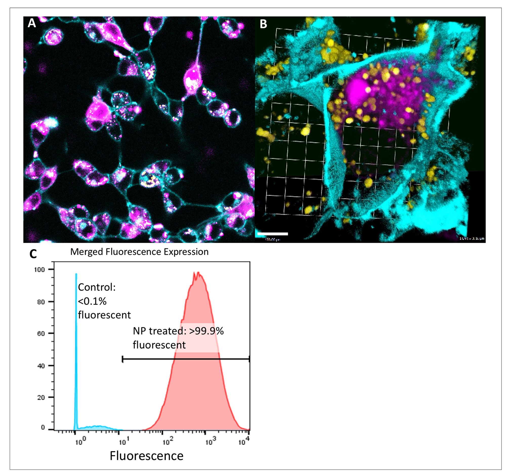 Intracytoplasmic delivery of siRNA by peptide nanoparticles in pancreatic and colorectal cancer is spatially separate from lysosomes and highly efficient.