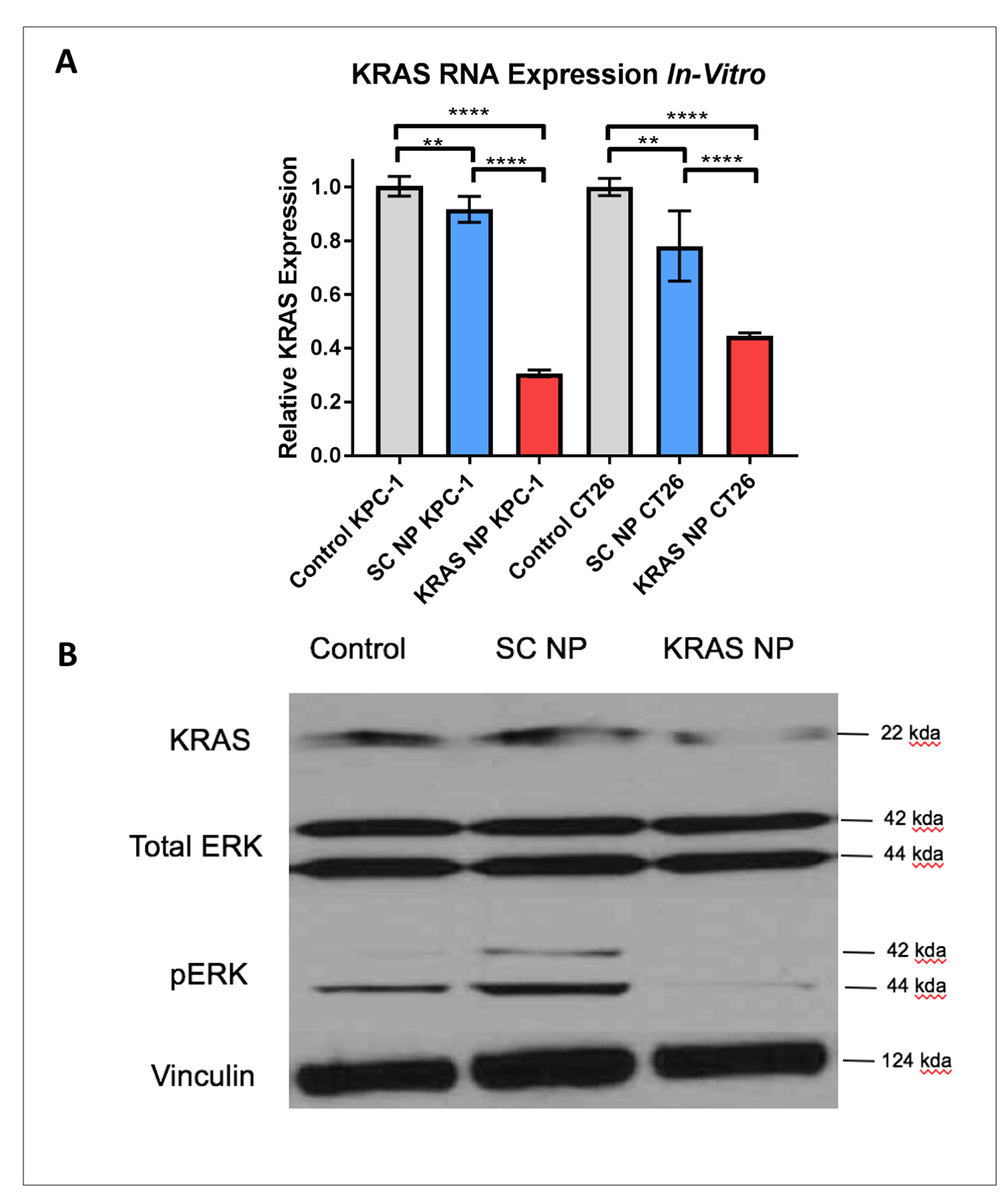 KRAS expression is reduced significantly in KPC-1 pancreatic cancer cells and CT26 colorectal cancer cells.