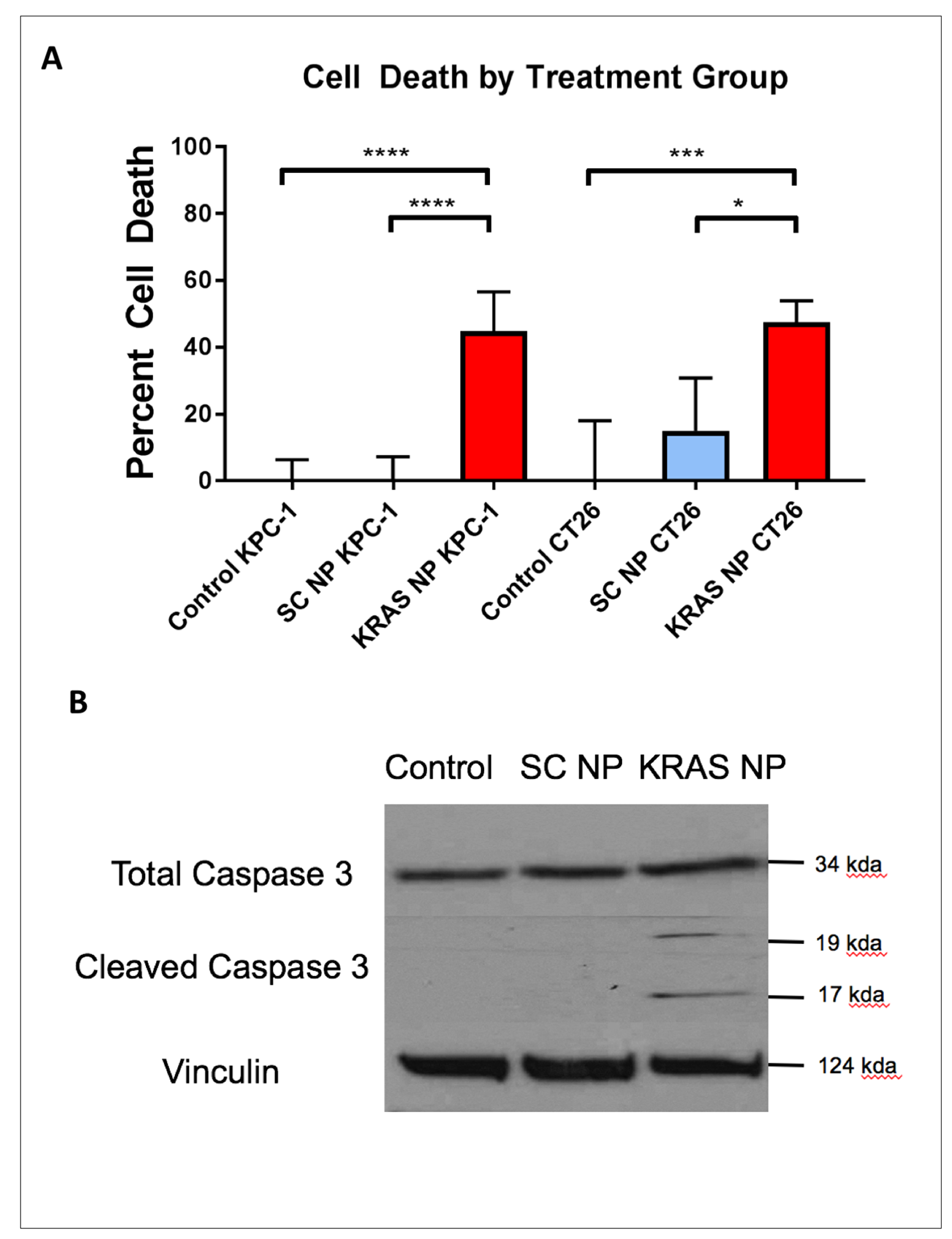 Treatment of pancreatic and colorectal cells with KRAS-siRNA NP leads to apoptosis mediated cell death.