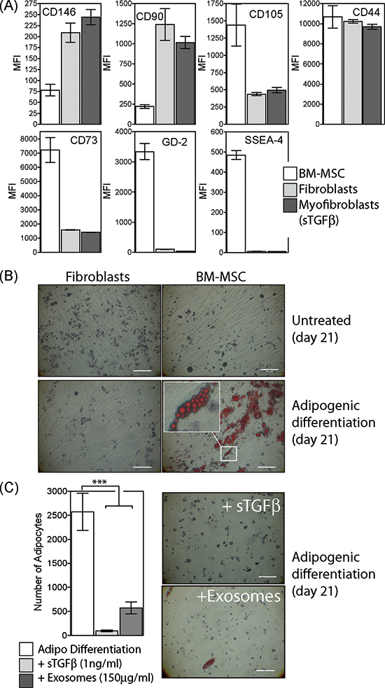 Characterisation of BM-MSC phenotype and differentiation.