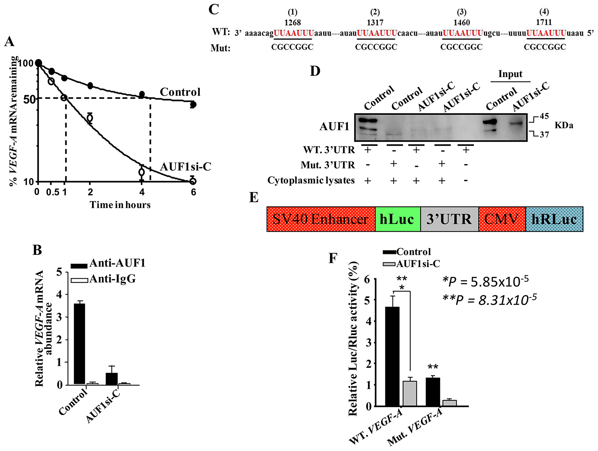 AUF1 binds to and stabilizes the VEGF-A mRNA.